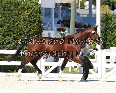 Tuesday Gold Ring: Class 108 Three-year old Colts & Geldings (born 2010)