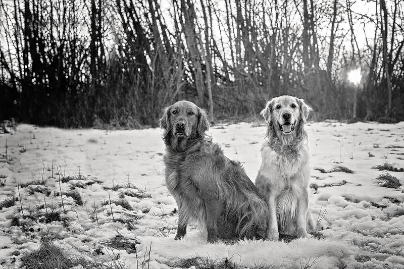 Ellie and Sawyer1 Digital BW.jpg