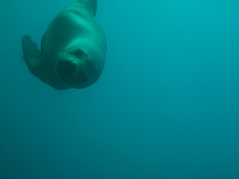 Diving in the Galapagos (106 of 392)