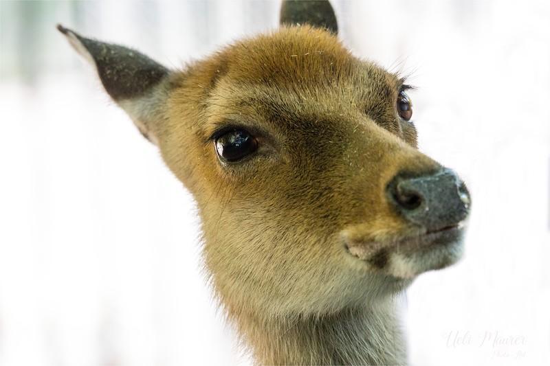 2016-09-07 Tierpark Goldau - 0U5A8679-Bearbeitet.jpg