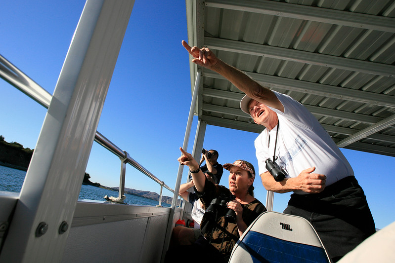 Birdwatchers thrill at the sighting of a Bald Eagle.