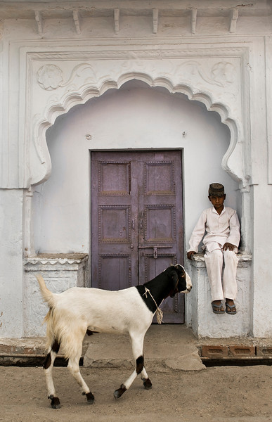 Muslim boy and goat in Bundi.