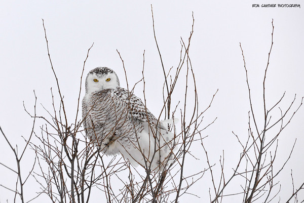 Birds / Oiseaux / Winter / Hiver 2015