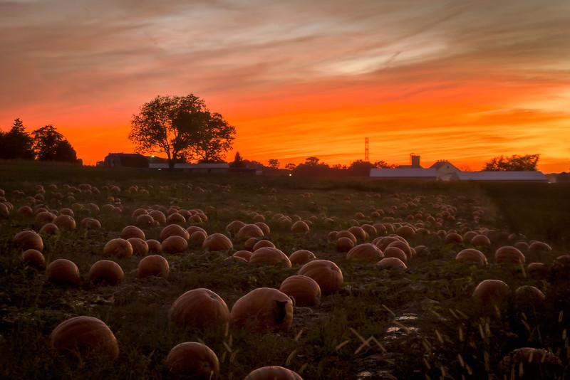 sunset - Glicks Pumpkin Field(p).jpg