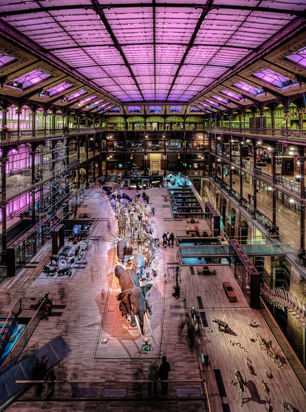Museum of Natural History in Purple