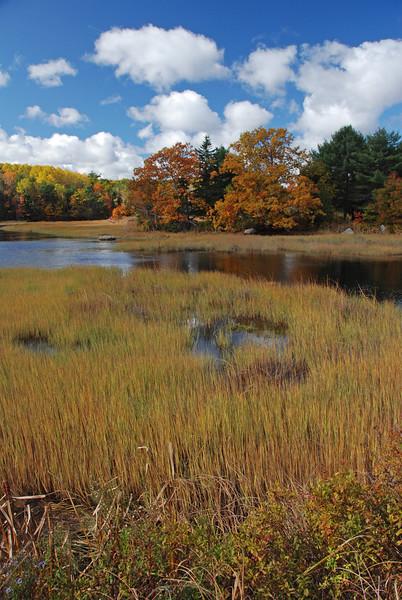 October Marshland
