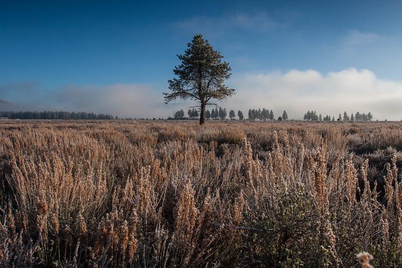 Early morning Truckee meadow