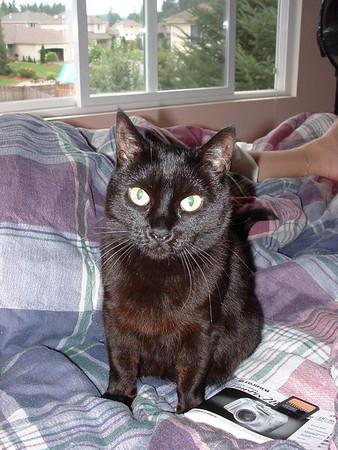 Chelan 1996 - 2005 - the original bitchy kitty