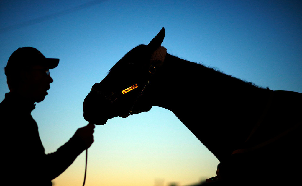 . Dan Queenan holds Kentucky Derby entrant Commanding Curve after a morning workout at Churchill Downs Friday, May 2, 2014, in Louisville, Ky. (AP Photo/David Goldman)