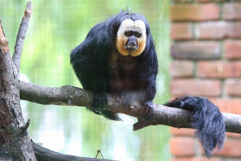 2016-07-17 Fort Wayne Zoo 778LR.jpg