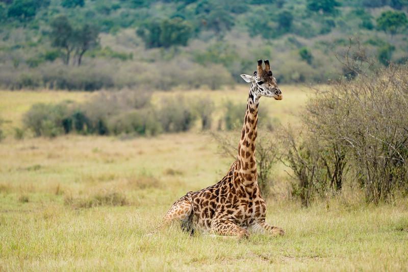safari-2018-137.jpg