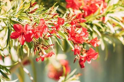 """Vibrant Springtime"" (photography) by David Fleshman"