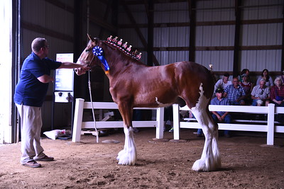 Jr Champion Clyde Stallion