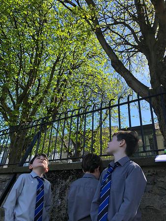 Tree Survey- Spring