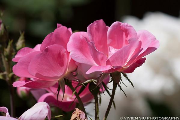 Flowers in David's Backyard