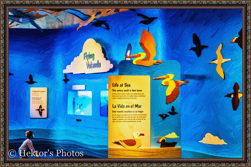 acquarium-14.jpg