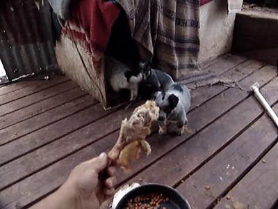 Nemo & Grawley's Winter 09 Pups