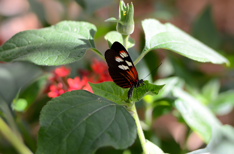 ryle-lenzi-irwin-butterfly-world-florida.jpg