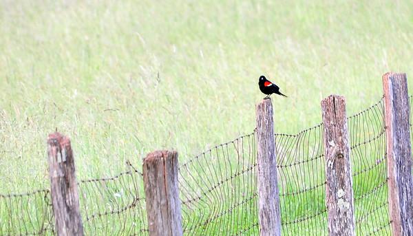 Jun 03 2012 - Birding Festival 2012