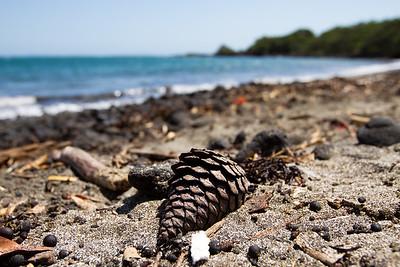 Day 2 - Auckland & Rangitoto Island