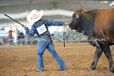 Junior Heifer Ringshots - American