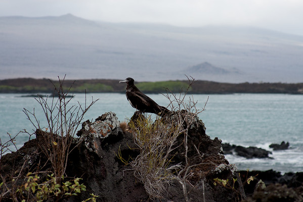 Journey into the Galapagos Day 9