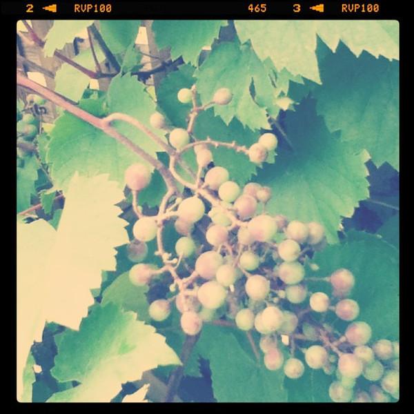 Vineyard tour in Nova Scotia - 6 vineyards in one day
