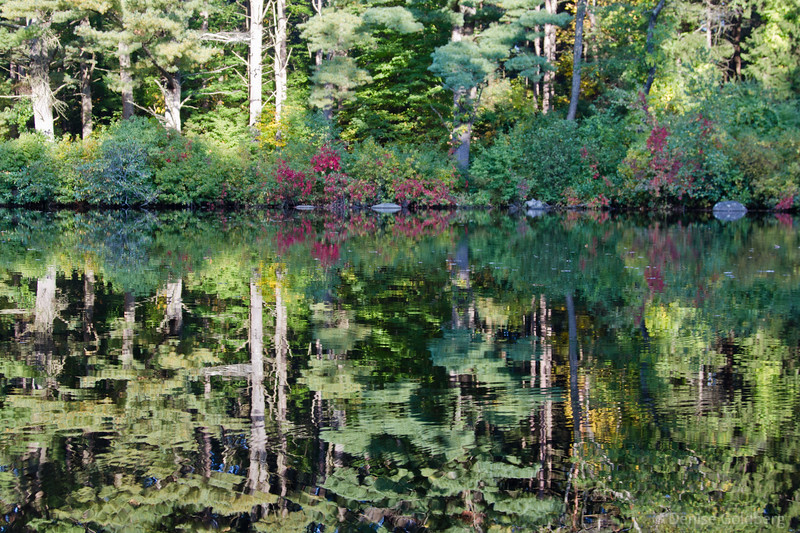 reflections, green with a touch of red