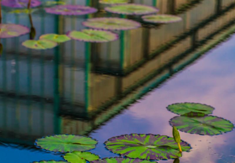 Lily  Pond 24