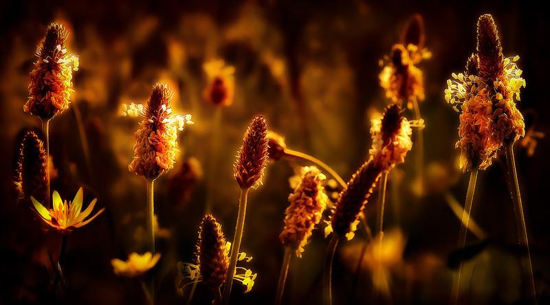 Grass by Ray Bilcliff - www.trueportraits.com