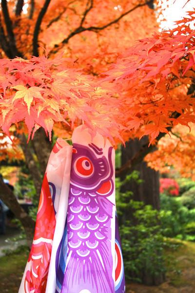 Portland Japanese Garden  11-11-11  3560.jpg