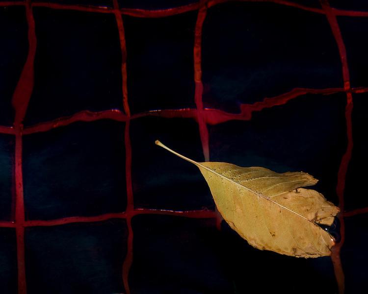 leaf in pool 8x10 sharpened.jpg