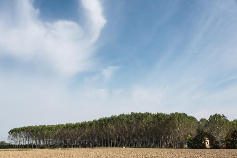 Poplars - Modena, Italy - September 22, 2015