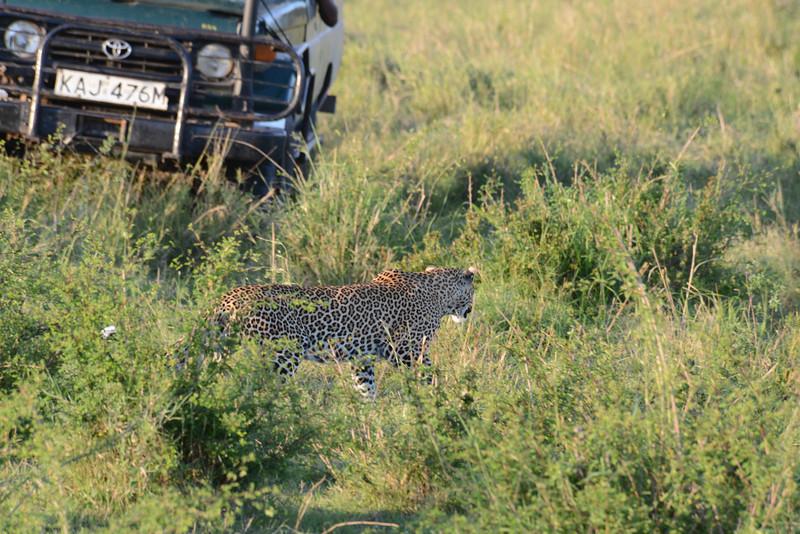 East Africa Safari 168.jpg