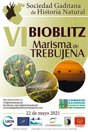 VI Bioblitz SGHN Marisma de Trebujena (o5-21)