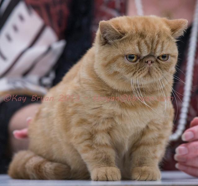 CatShow2014174.jpg
