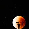 Hunters Moon - Frank Callens - Artec Moeskroen - Aanvaarding