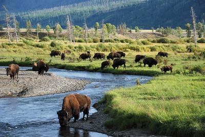 Idaho, Yellowstone & Grand Teton