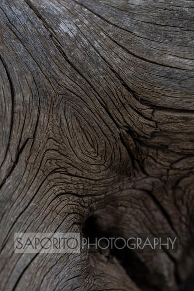 Cololrado Tree Lines