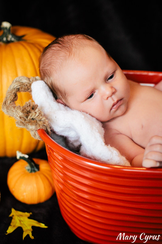 Baby Kieran with Pumpkins: Newborn Portraits in Dallas, Texas & Beyond by Mary Cyrus Photography