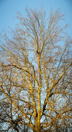 0.8 Tree Portraits