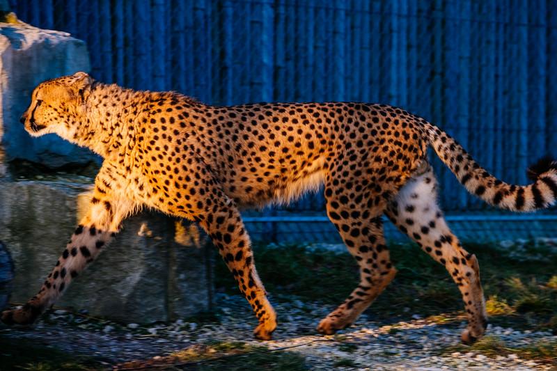 Tonis Zoo-0347.jpg