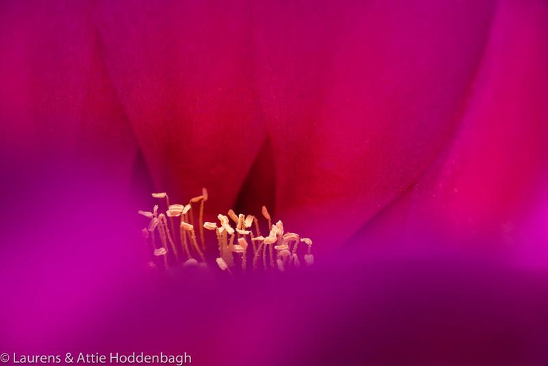 Close-up Cactus flower