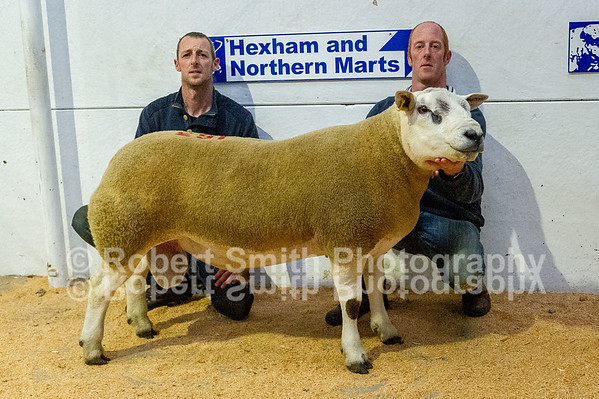 Hexham Mart Ram Show and Sale - September 26th 2018