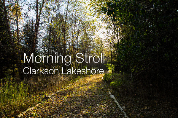 Morning Stroll at Clarkson Lakeshore