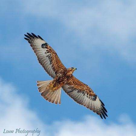 Galapagos Hawks & Albatrosses