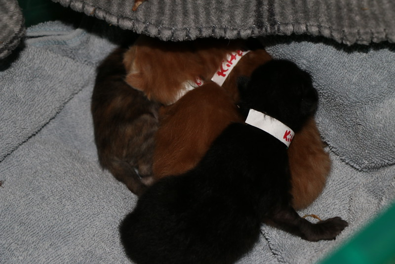 Trapping Mom and Kittens - 040115 - 5.JPG