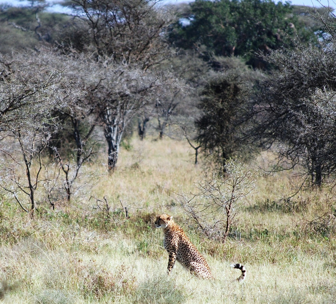 Serengeti (135).JPG