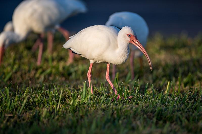 naples-birds-12-2017-691.jpg