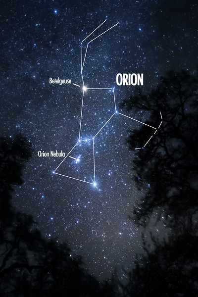 Orion Tree Final Labeled.jpg